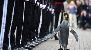 Cuki: ilyen tábornoka még egy hadseregnek sem volt