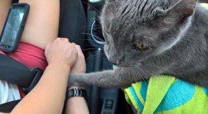 Tudta a macska, hogy utolsó útjára megy