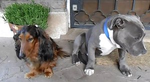 Vajon melyik kutya harapdálta szét a talpbetétet? Aranyos videó