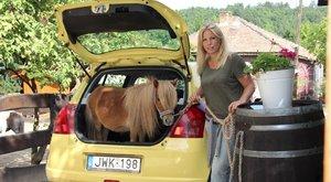 Csomagtartóban utazik Alfi, a ló
