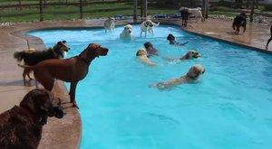Luxuspanzió kutyáknak medencével