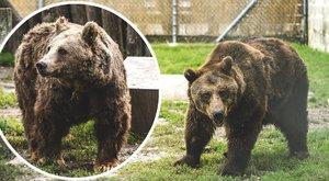 A borzalomból érkezett Veresegyházra két medve