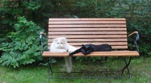 Wellnesshétvégét ad cserébe eltűnt cicájáért