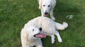 Elveszett kutyáikat keresik Szörényiék