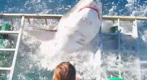 Horror: így tört be a hatalmas fehér cápa a búvár ketrecébe