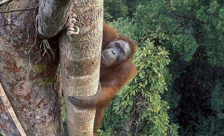 Égig érő fát mászik a majom az év fotóján
