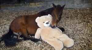 Cuki: anyjaként szereti plüssmaciját a ló