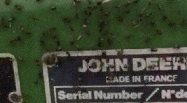 Ilyen az, amikor több ezer pók beleszeret egy traktorba