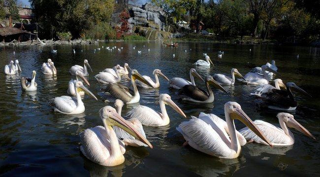 El sem hiszi, miket találtak az állatkerti tóban