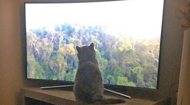 Megbabonázta az állatokat Attenborough új sorozata!