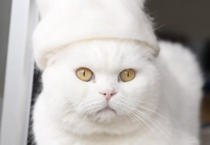 Ez nagyon beteg: de a macskák láthatóan szeretik