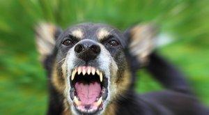 Rettenetes harci kutyákat klónoznak az oroszok