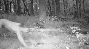 Új állatfajt fedeztek fel: az LSD-s tigrisembert