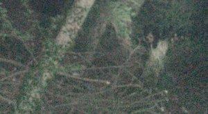 Barátkozó kísértettől retteg az asszony - fotó