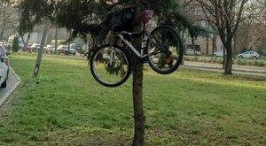 Egyedi biciklivédelmi megoldás Szegedről: fenyőfára lakatolja bringáját (kép)