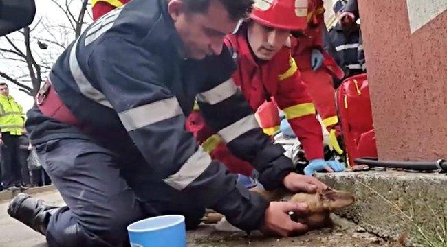 Lenyűgöző mit tett ez a román tűzoltó