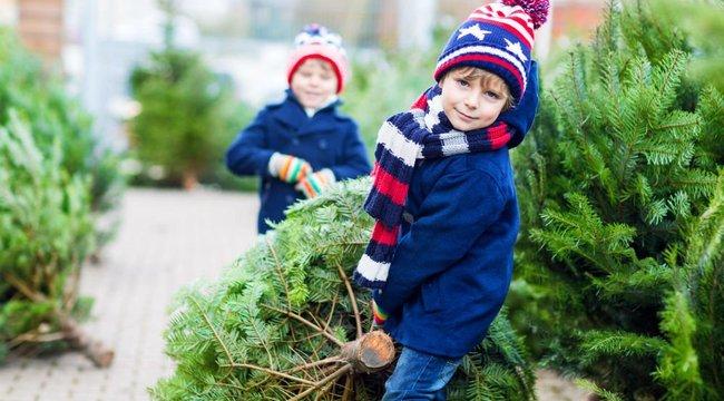 8 tipp a tökéletes karácsonyfához