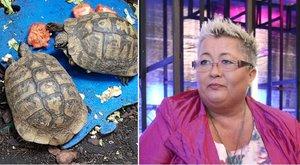 Húszéves teknősökkel él együtt Falusi Mariann