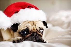 Ünnepi csonttól csinálja össze magát a kutya – ezekkel ne etesse karácsonykor (se) kedvencét