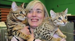 Rangos díjakat nyert a macskáival, most eltiltották az állatoktól