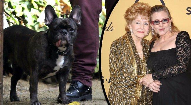 Kutyája is elbúcsúzott Leia hercegnőtől