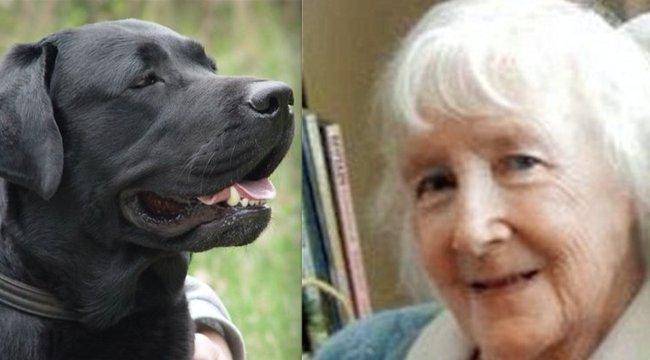 Egy dédit vittek be a mentők, mikor felvettek egy kóbor kutyát mellé