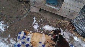 Kiláncolt kutya fagyott halálra Kispesten