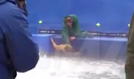 Így kínozta trénere a kutyát egy hollywoodi forgatáson