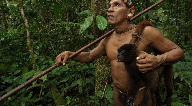 Menü az esőerdőben: majomhús, sült vaddisznó, tukán
