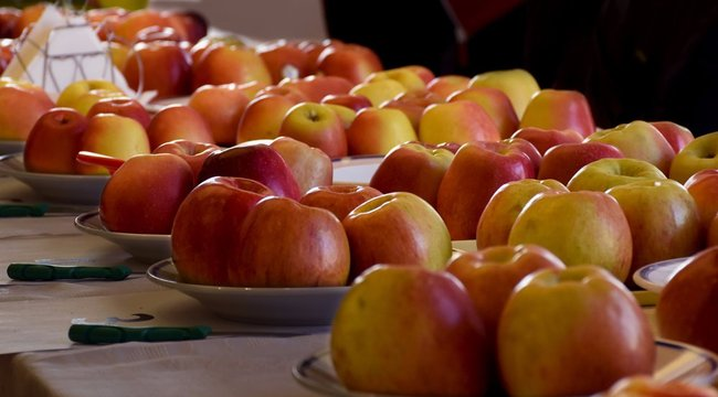 Új magyar almafajták kerülhetnek piacra