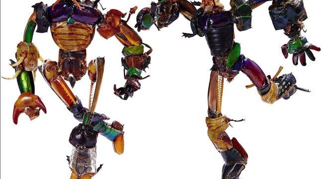Halott bogarakból készítette a robotokat Szöllősi Géza