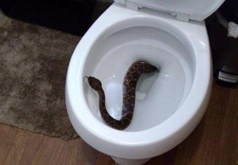 Hatalmas kígyó mászott elő a vécéből, de csak ezután jött az igazi meglepetés