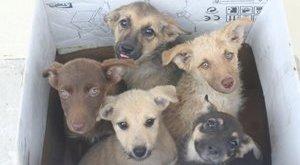 Adó 1 százalék állatvédő, kutyamentő feladatokra (x)