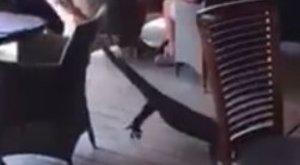 Nem a farok csóválja: hős pincérnő mentette meg a rémült vendégeket