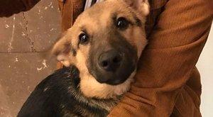 Budapesti mozgólépcső kapta el a kutyust