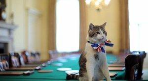 Ellustult Larry, a brit királyi főegerész