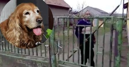 Utoljára indultak el megkeresni a vascsővel megvert ácsi kutyát, Gézát
