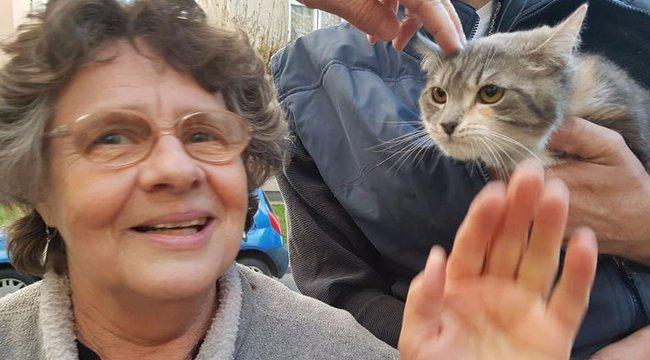 Így találták meg a gödöllői politikus macskát - képriport
