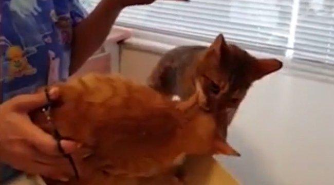 Köpenyes rém elől mentette meg társát a gyáva macska