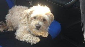 Végre egy jó hír: előkerült Roli, a balesetet szenvedett idős pár kutyája!