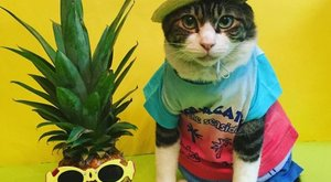 Ananász és macska: ha szeretne vidám dologról olvasni, ez talán pont az – fotók