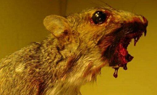 Gyilkos mókusokat idomított a nő, hogy bosszút álljon exén – benézte a rendőrség?