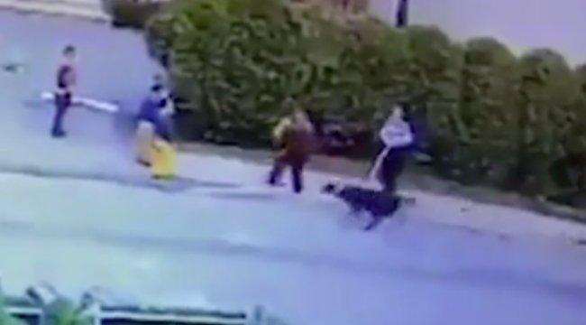 Brutális kutyatámadás: megtépte a hároméves arcát a pitbull - videó