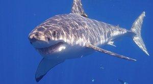Férje ökle mentette meg a vérszomjas cápától