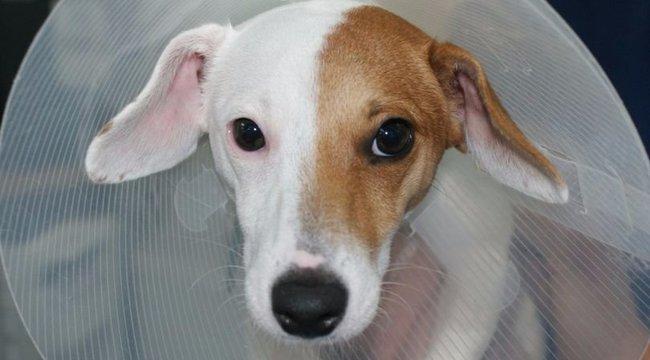 """""""Nemváltó"""" műtéten esett át a kutya"""