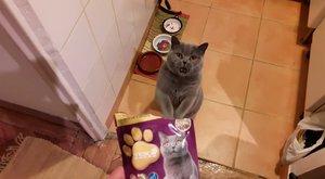 Sztár lett az ételért könyörgő macska