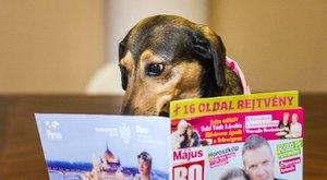 Már nem vendég a szerkesztőségben Tubi, a Bors kutyája