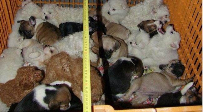 Szegény kis ebek! Összezsúfolva fuvarozott 54 kutyát az olasz férfi Nagykanizsánál – képek