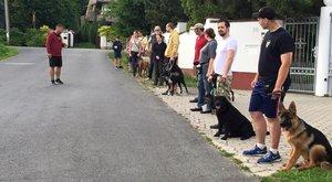 Jogosítványt kapnak a fehérvári kutyák