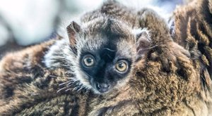 Folytatódik a nyíregyházi babyboom - cuki fotók